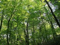 段戸裏谷原生林きららの森・写真