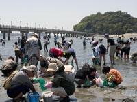 蒲郡竹島海岸 潮干狩り・写真