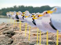 佐久島(大浦海水浴場) 潮干狩り・写真