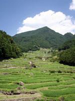 四谷の千枚田・写真