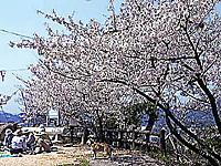 因島公園・写真