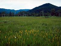 大江湿原・写真
