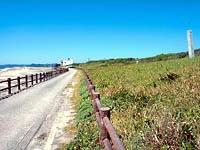 太東海浜植物群落地・写真