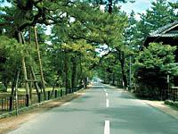 津田の松原・写真