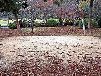 相撲神社・写真