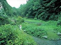 東北大学植物園・写真