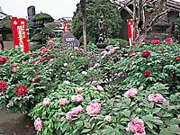 立岩寺・写真