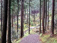 大曽根公園(世界の椿園)・写真