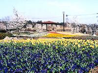 大宮花の丘農林公苑・写真