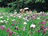行田公園・写真