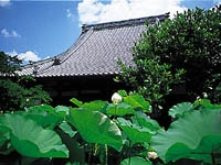 蓮博物館 慶明寺のハス・写真