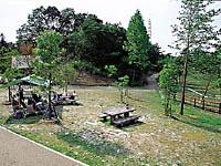 デイキャンプの森
