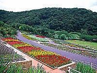 和歌山県立植物公園緑花センター・写真