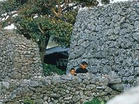 サンゴの石垣(阿伝集落)