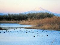 大井川河口野鳥園