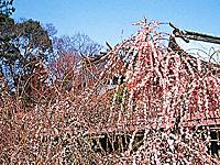 結城神社・写真
