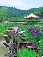 永沢寺・花しょうぶ園