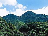立花山クスノキ原生林・写真