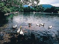 白雲の池・写真