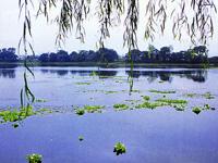 水前寺江津湖公園・写真