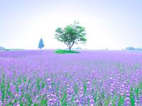 メナード青山リゾート ハーブガーデン・写真