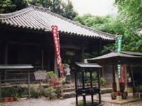 太江寺のフジ