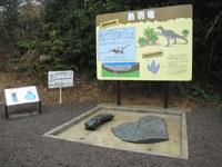 鳥羽竜化石発見現場・写真