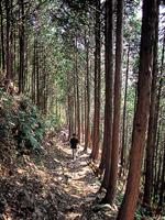 ツヅラト峠・写真