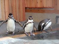 大内山動物園・写真
