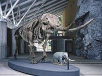 多賀町立博物館
