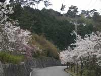 雨山文化運動公園の桜・ツツジ
