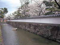 膳所城跡公園の桜・写真