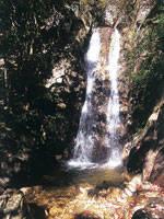 楊梅の滝・写真