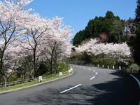 比叡山ドライブウェイ・写真