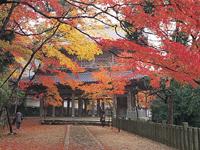 永源寺のカエデ・モミジ・写真