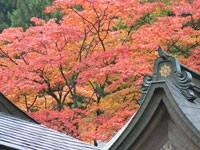 比叡山延暦寺の紅葉・写真