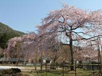 徳源院(清滝寺)・写真