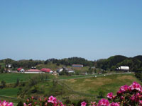 京都府農林水産技術センター畜産センター碇高原牧場・写真