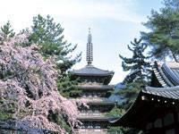 醍醐寺・写真