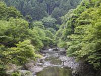 清滝川・写真