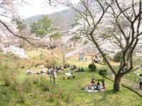 大野ダム公園・写真