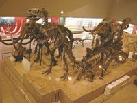大阪市立自然史博物館・写真