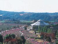 富田林市農業公園サバーファーム・写真