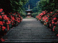 勝尾寺・写真