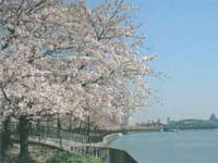 毛馬桜之宮公園・写真