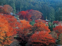 勝尾寺の紅葉・写真