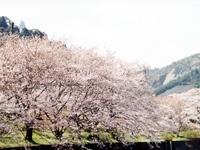 山中渓・写真