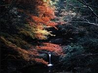 犬鳴山の紅葉・写真