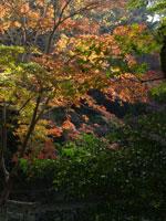 長野公園の紅葉・写真