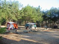 自然の森ファミリーオートキャンプ場・写真